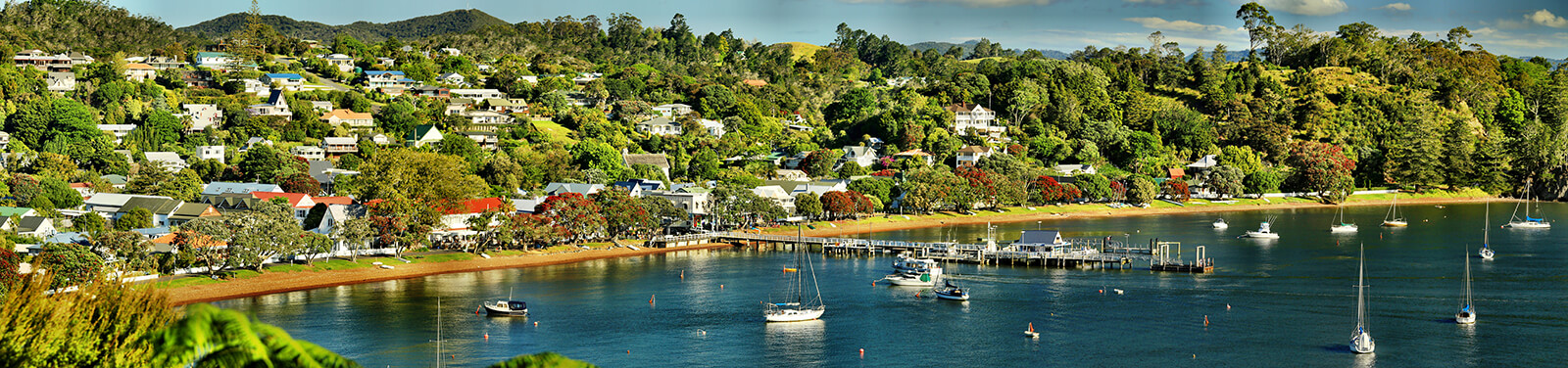 Photo of Pohutukawa trees in flower in Russell, Bay of Islands
